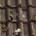 Verschmutztes Dach